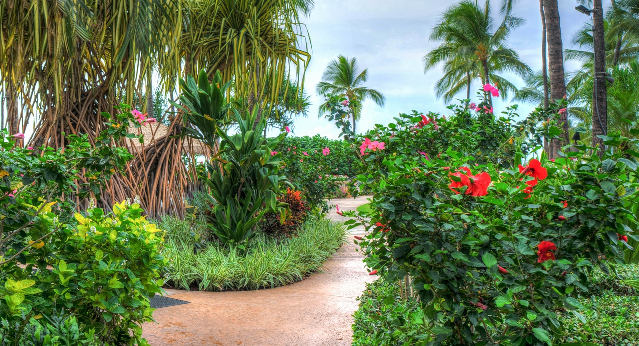 Tropical Plants in Hawaii