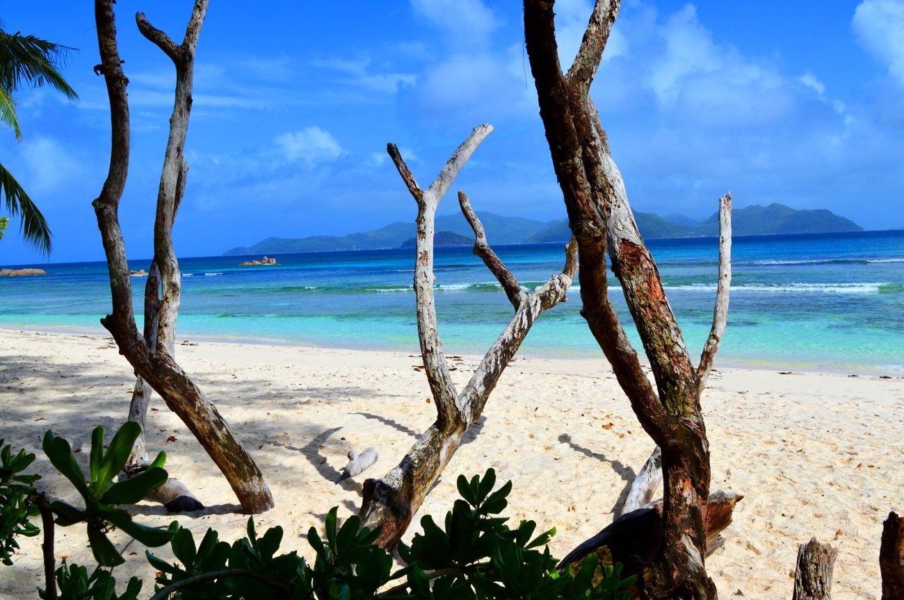 Old trees on La Digue