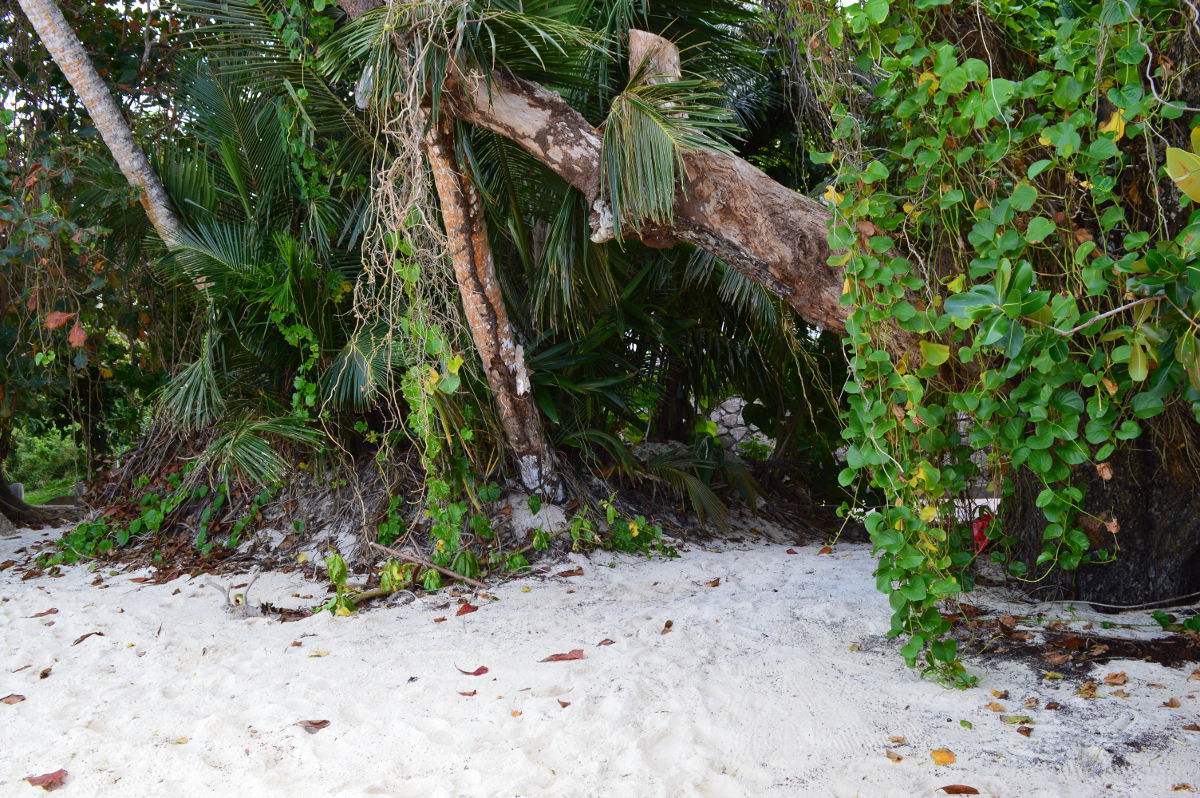 Tropical Forest behind the Beach