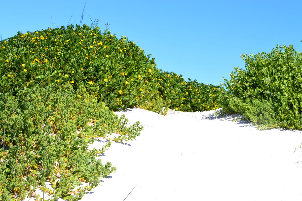 Flowers on the dunes