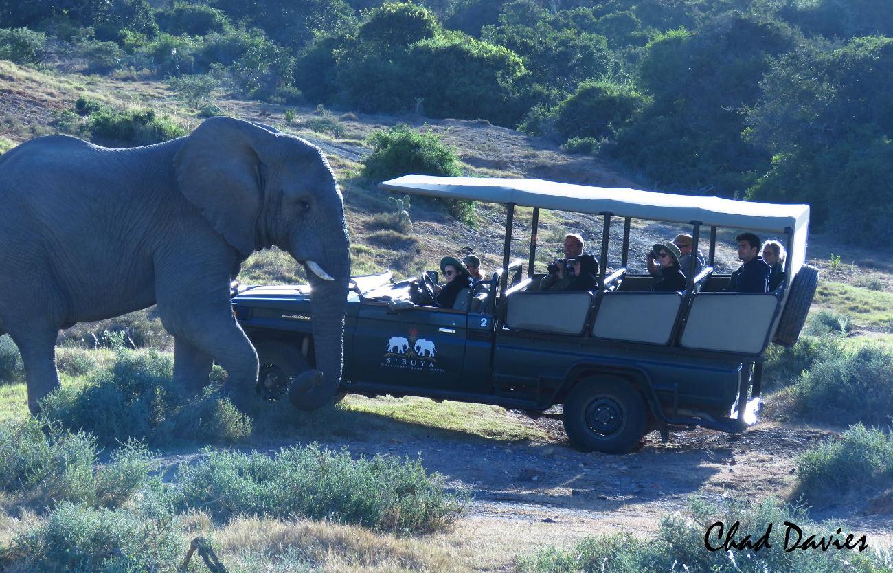 Safari - Eastern Cape, South Africa