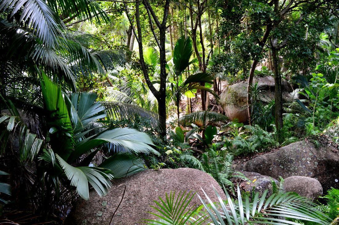 Forest on Praslin, Seychelles