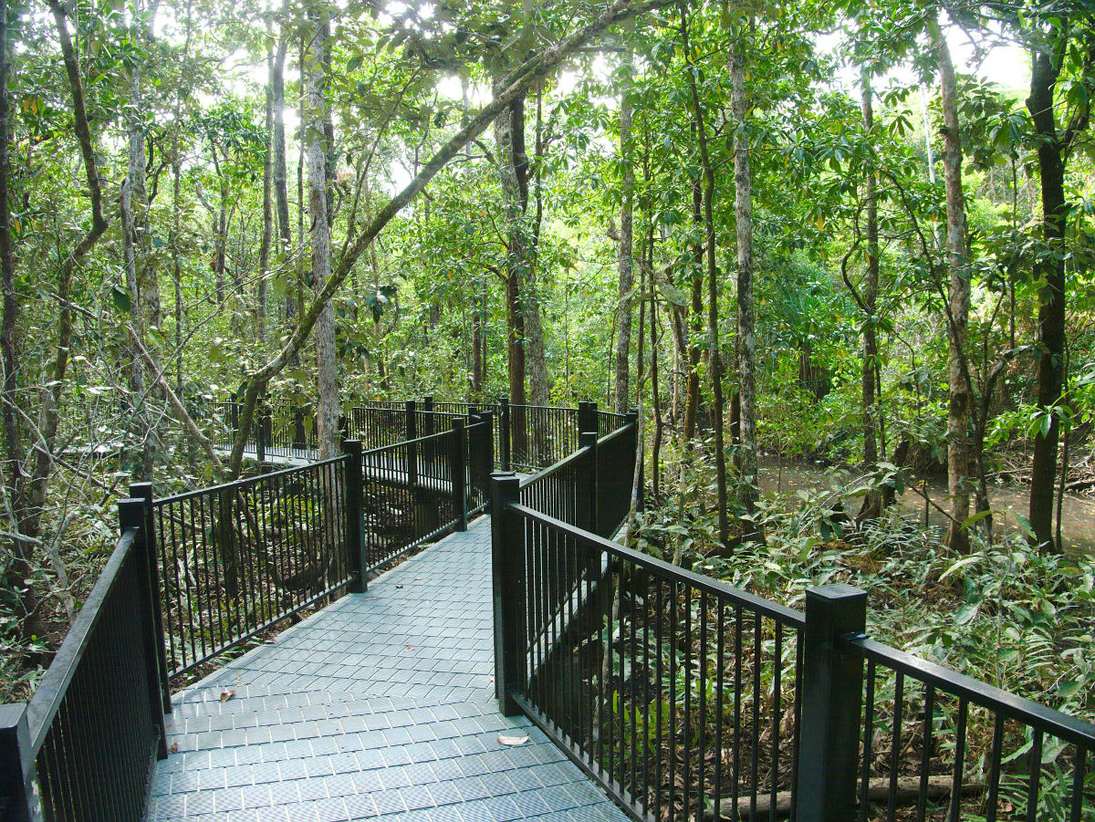Walk through the Mangroves