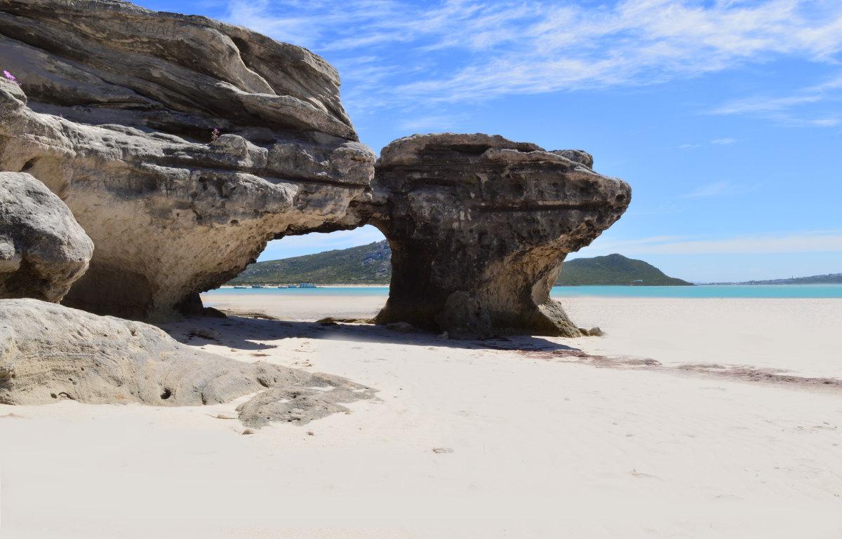 Tyrannosaurus Beach