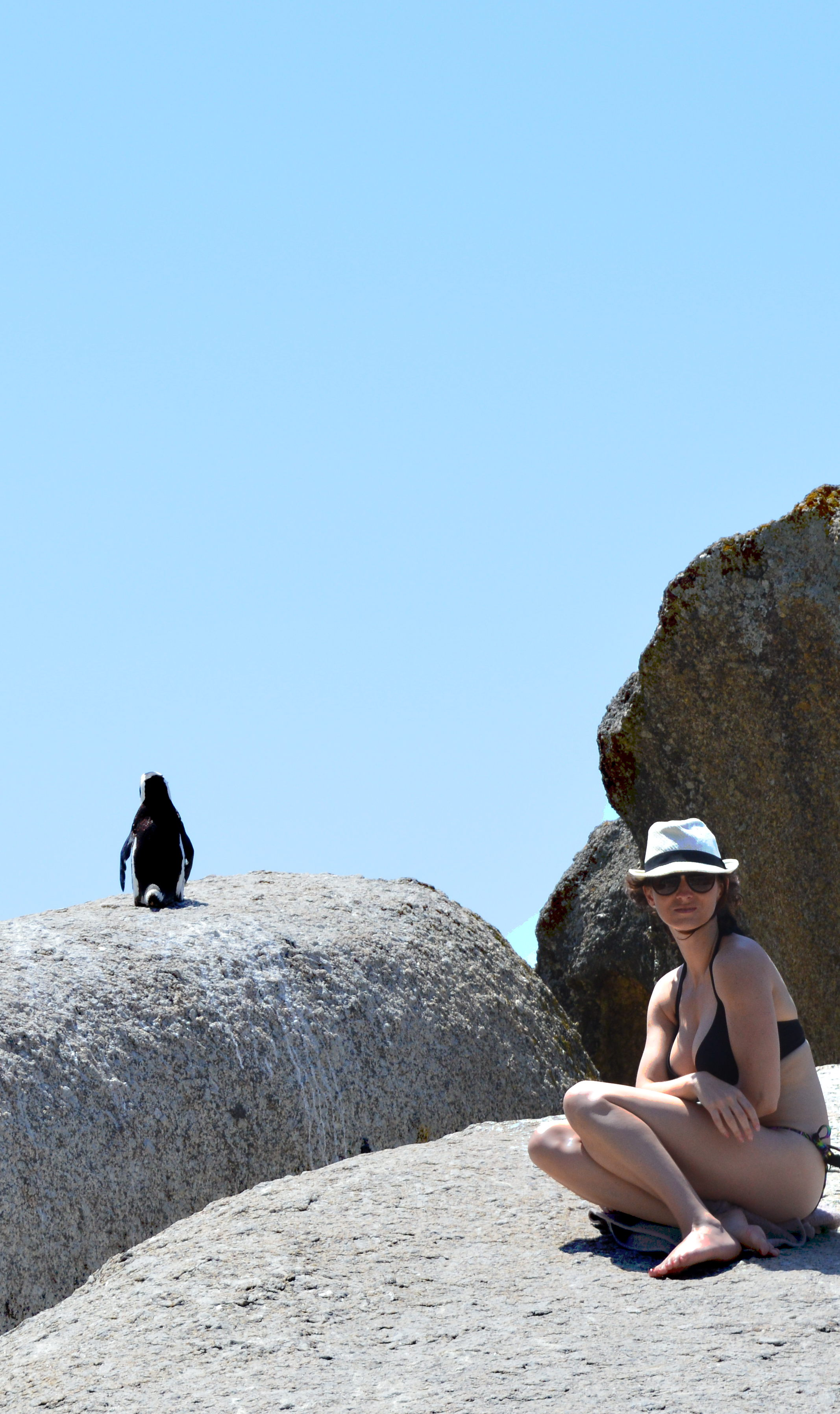 Penguin on Boulders