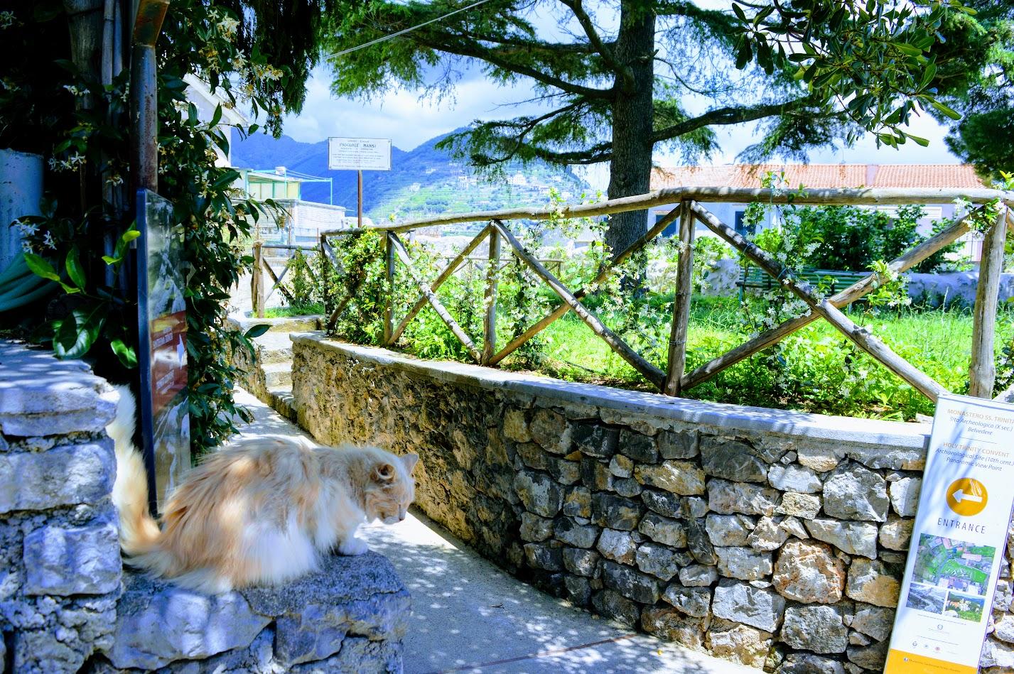 Cat in Ravello