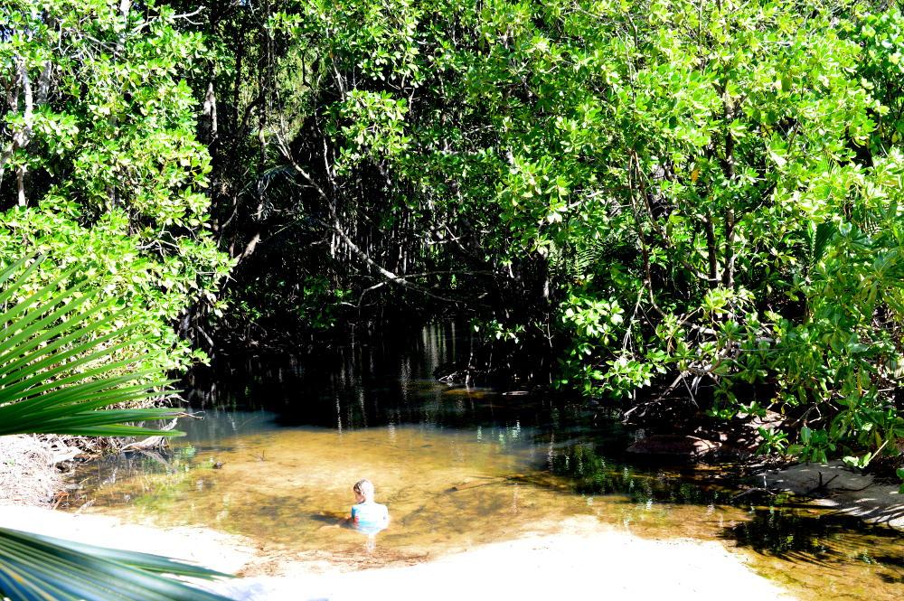Pond near Anse Georgette