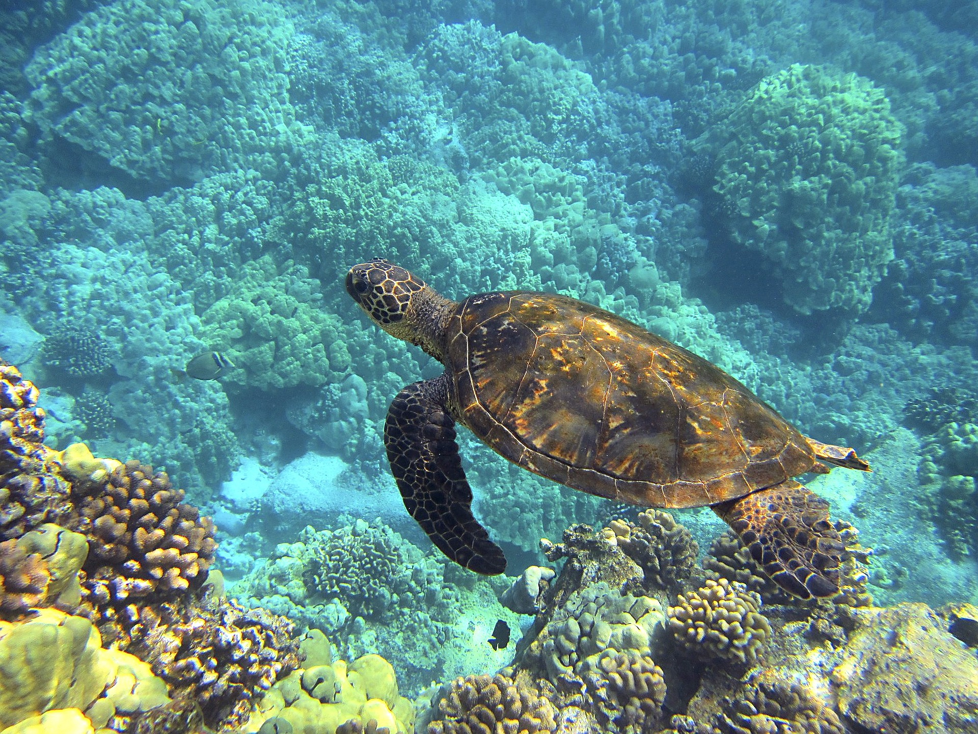 Turtle spotted while snorkeling