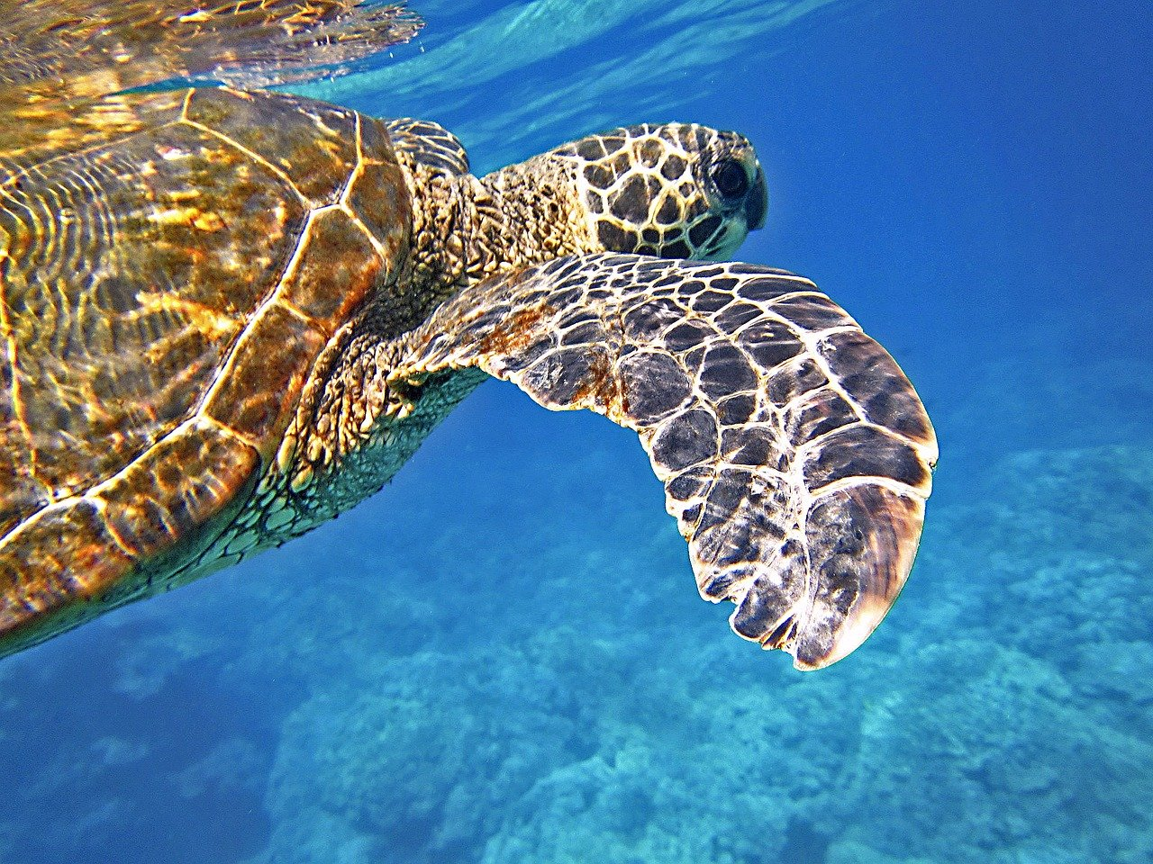 Turtle in the Seychelles