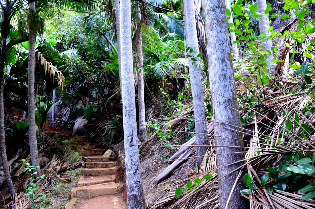 Pathway in a Tropical Forest